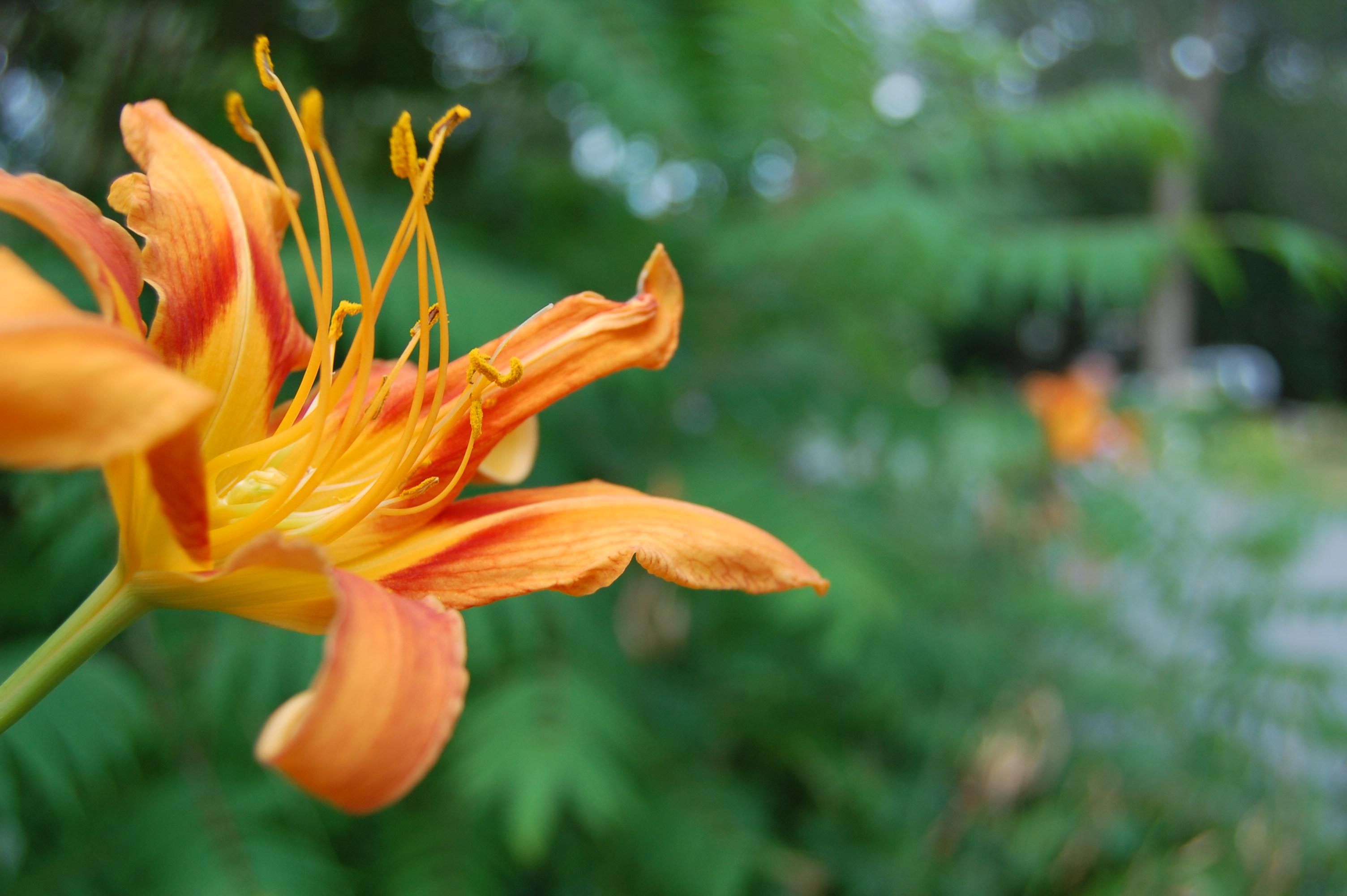 summer_orange