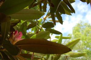 summer_pink