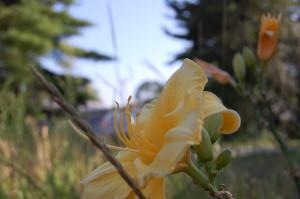 summer_yellow