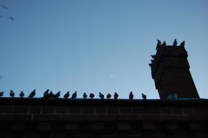 merrimack_birds