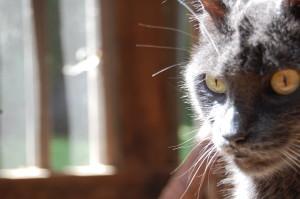 photo101_cat