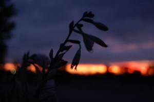 photo101_dawn